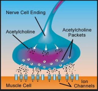 acetylcholine999999999